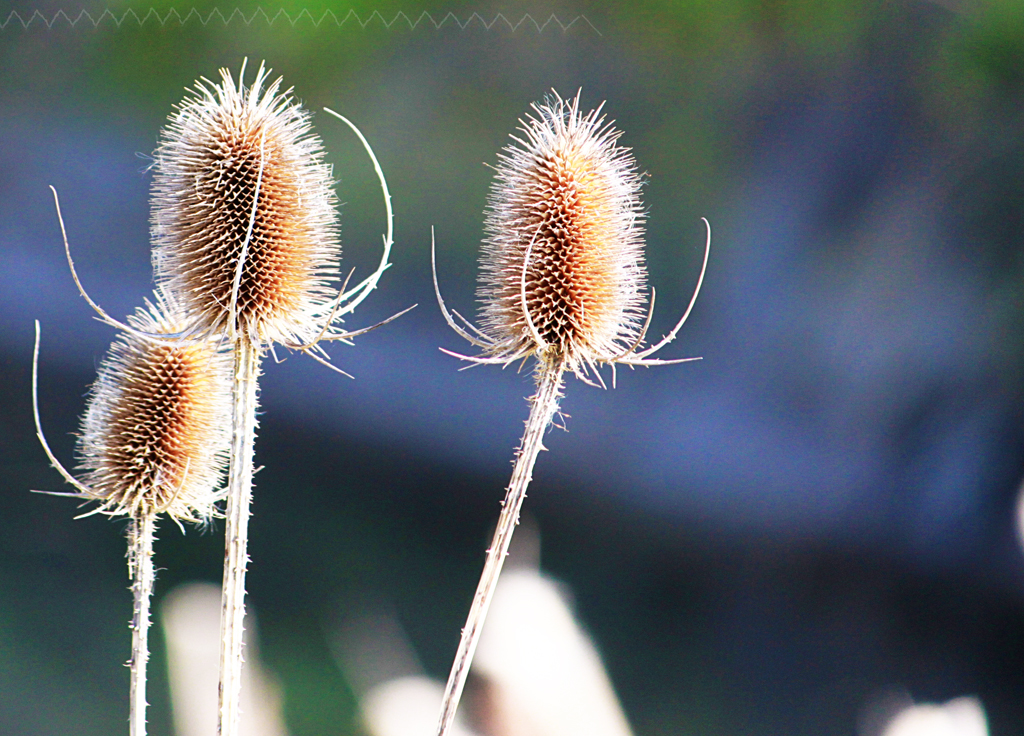 Simple things teasle